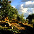 A road through Tuscan fields