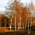 Woods in Mora