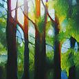 Morro Bay Eucalyptus Grove